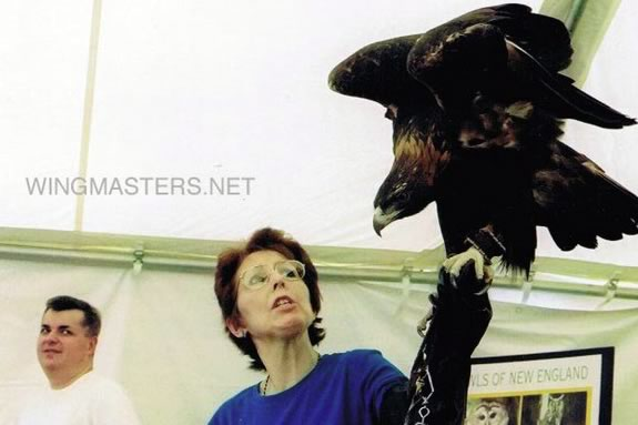 Wingmasters demonstrate live birds of prey of various specious in Massachusetts