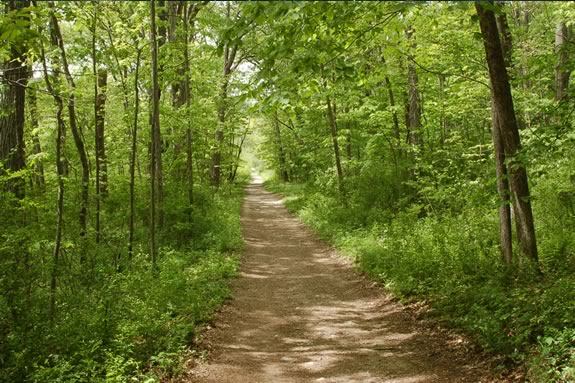 Take an evening stroll at Bradley Palmer State Park with your family!