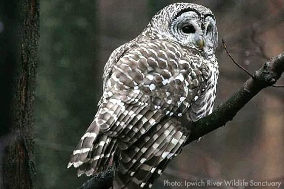 The Family Owl Prowl at Ipswich River Sanctuary is bound to be a good time!