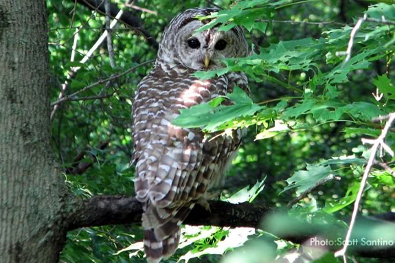 Join a Family Owl Prowl Campout at the Ipswich River Wildlife Sanctuary. Photo: Scott Santino