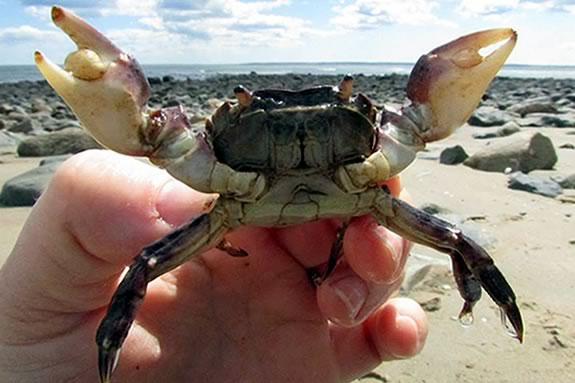 Explore the tide pools of Sandy Point Reservation with Joppa Flats Educators