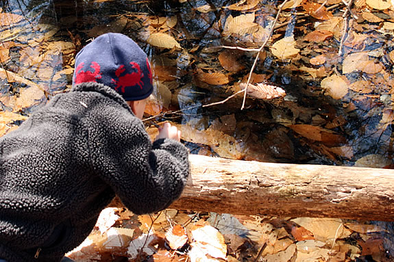 Families will learn about vernal pools with ECGA at Farnsworth Reservation! Photo: Bill O'Connor