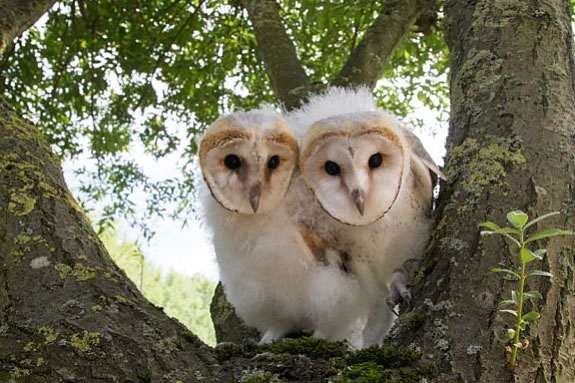 Nature Owl Power in the theater at Parker River Wildlife Refuge in Newburyport
