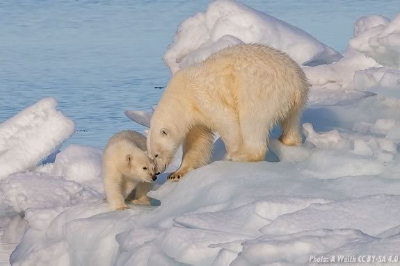 Come learn about the animals of the polar habitats at the Joppa Flats Center!