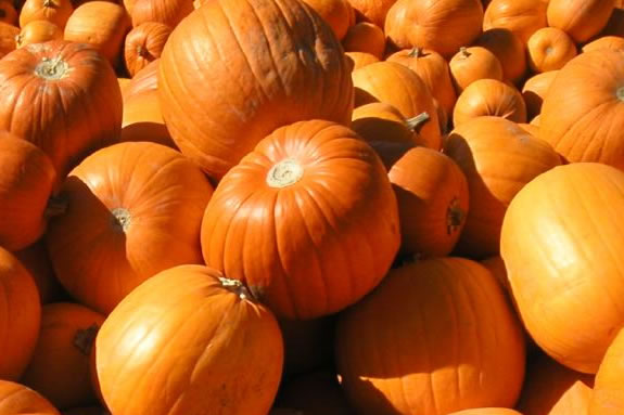 Pumpkin Day at Cogswell Grant is a wonderful fall afternoon event!