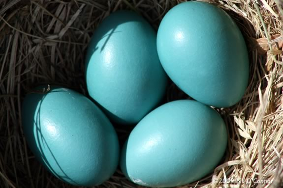 Kids can learn about nests at this Imagine Sing and Learn at Joppa Flats!