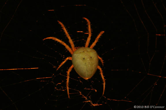 Learn about spiders at Ipsiwch River Wildlife Sanctuary in Topsfield during this spooky time of year.