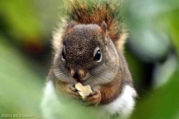 Kids will learn about squirrel and birds nests at Mass Audubon's Joppa Flats Education Center in Newburyport Massachusetts
