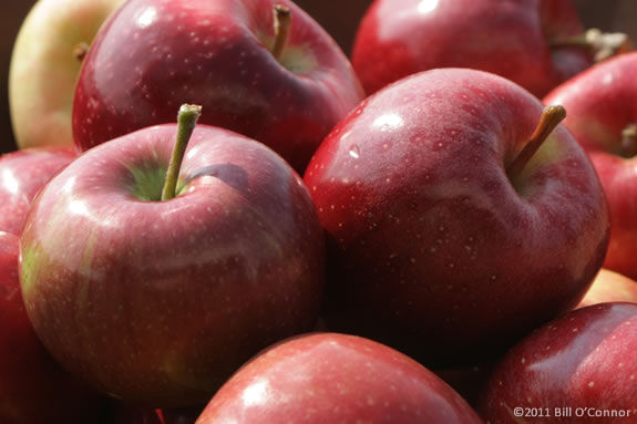 There's all kinds of fun going on at Smolak Farm's Apple Festival!