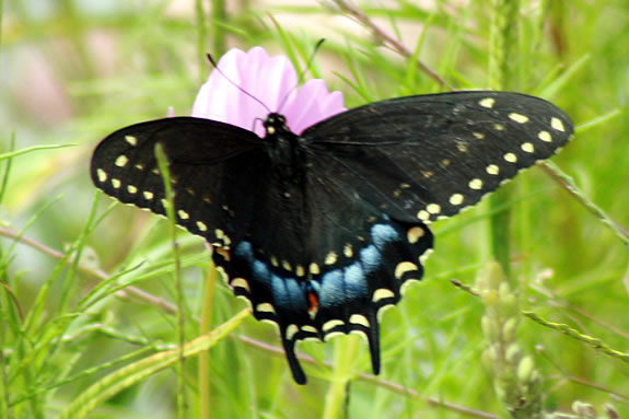 Butterfly Walk at Ward Reservation