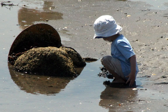 Go on a low tide exploration at Grace Oliver Beach in Marblehead