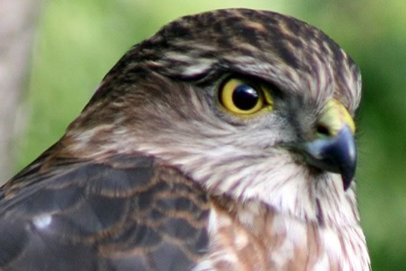 Kids ages 7-12 will learn about Winter raptors that live on the North Shore!