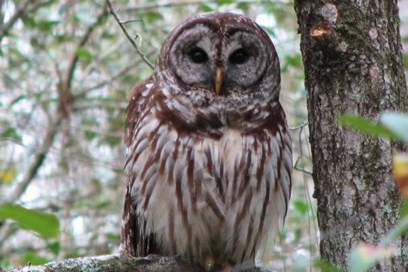 This Family Dusk Paddle at Ipswich River Wildlife Sanctuary will be a hoot!