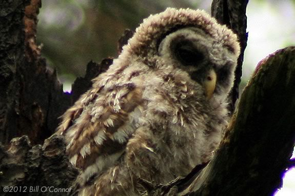 Come to the owl Prowl at Ravenswood Park, meet an owl and learn to spot them