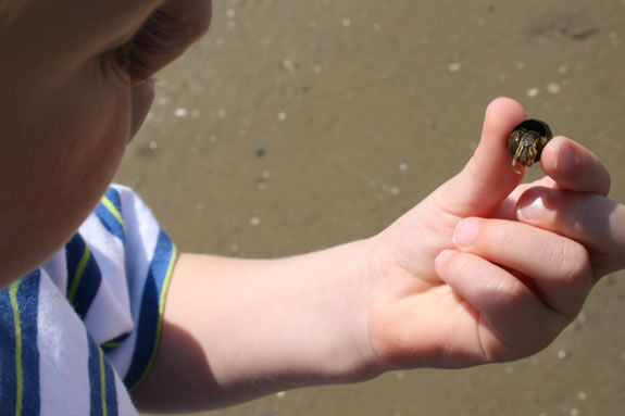 Kids will explore the tidal pools of Parker River with a park ranger