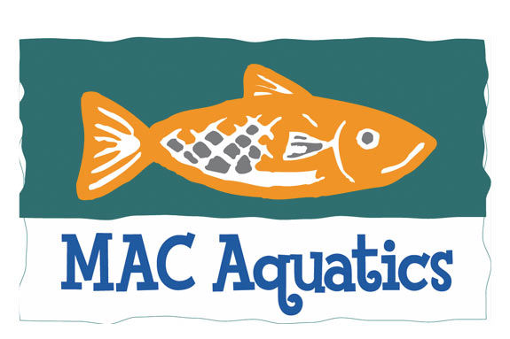 Manchester Athletic Club Aquatics, Swim lessons, swim camp, summer swimming