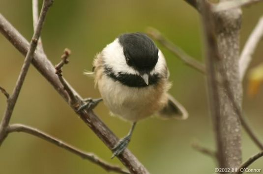 Learn about song birds with a story and a wal at Ipswich River Wildlife Sanctuar