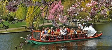 Swan Boats of Boston