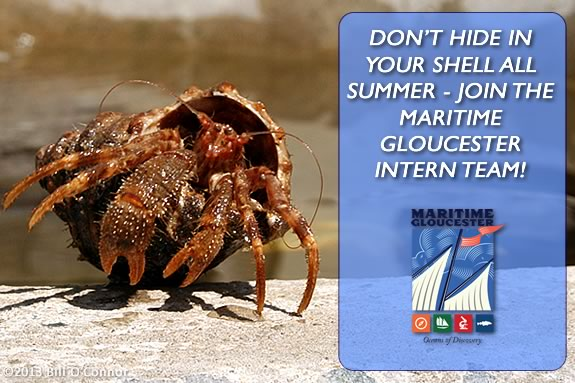 Don't hide in a shell all Summer! Join the intern  team at Maritime Gloucester!