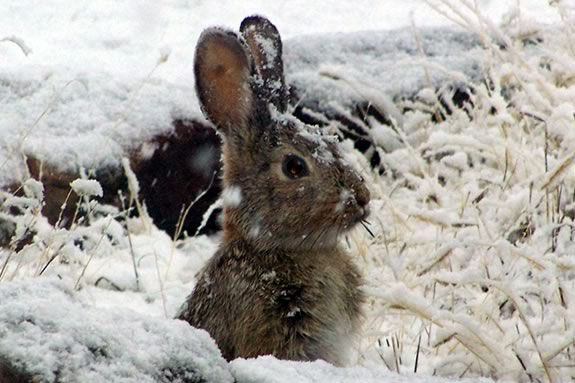 What animals do you see in winter?  Kids will learn about how animals survive the winter months