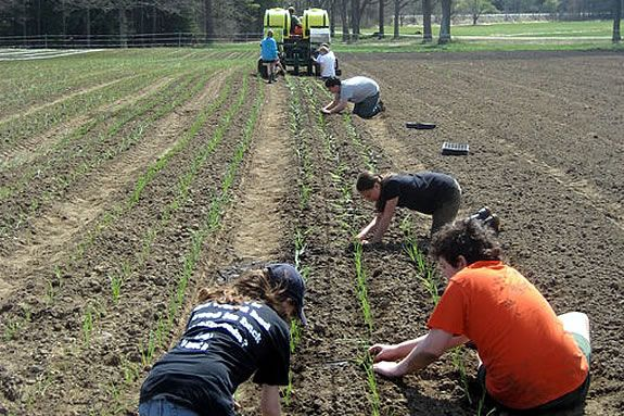 Join the farmhand crew to work along side the staff at Appleton Farms.