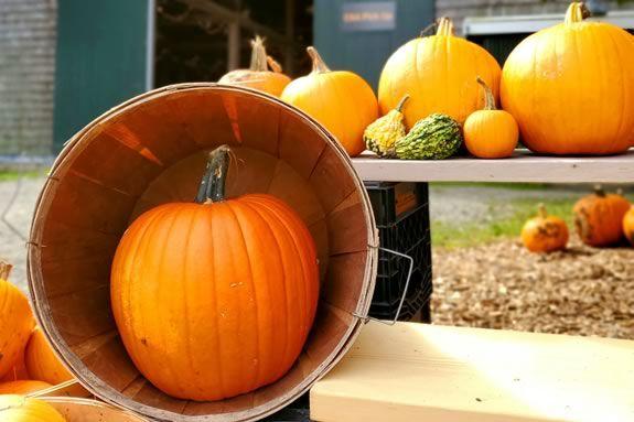 The spirit of Octoberfest is taking over Appleton Farms in Ipswich Massachusetts