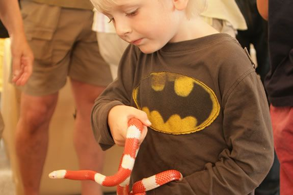 Albino Milk Snake being held by a child at Cape Ann Vernal Pond Team presentation. ©Bill O'Connor