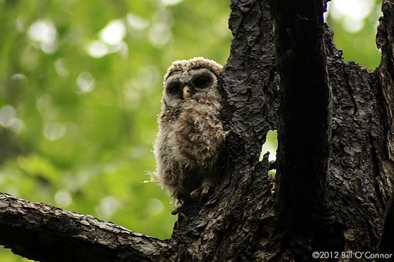 Join a family owl prowl the Rough Meadows in Rowley with Mass Audubon Joppa Flats Educators