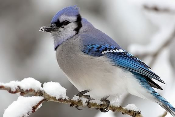 Learn about winter birds and their migrations.