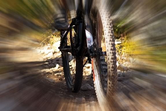 Take a casual bike ride on the trails at Harold Parker State Forest!
