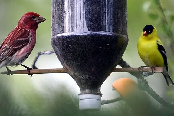 Learn how to build a birdfeeder out of recycled materials at Joppa Flats
