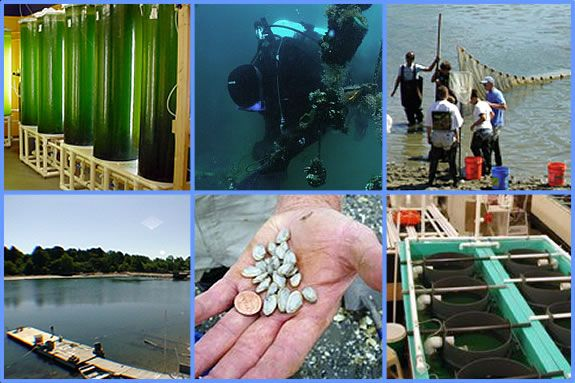 Tour Salem State's Cat Cove Marine Lab for Trails and Sails! FREE!