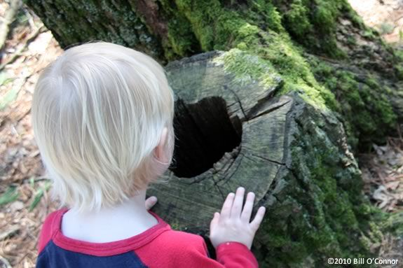 Kids can explore the Coolidge Reservation with their favorite adult!