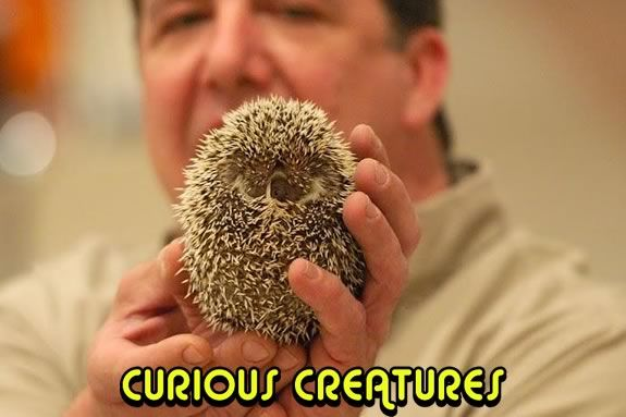 Curious Creatures will put on a free prestation at the G.A.R. Memorial Library!