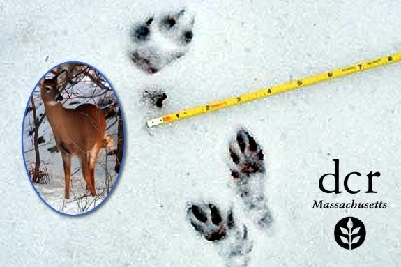 Tracking skills are a great way to improve your outdoor adventures!