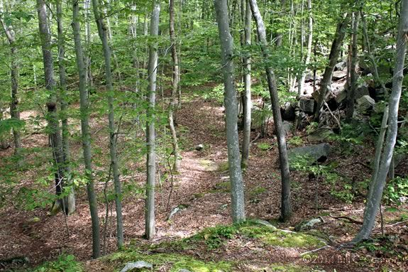 Hike the trails of Dogtown in Rockport, MA on Thanksgiving Day with ECGA