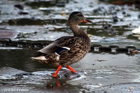 Preschoolers will learn ducks, clams & other mud creatures at Joppa Flats Center