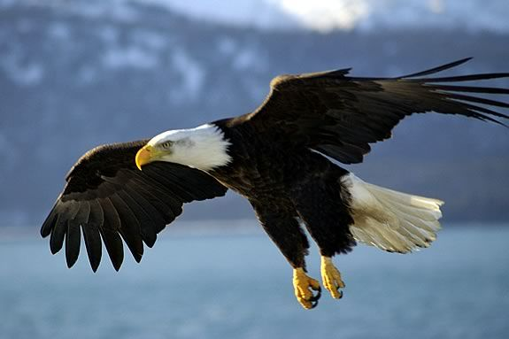 Kids Will Learn About Eagles, Their Migrations And Varied Habitat At Joppa  Flats