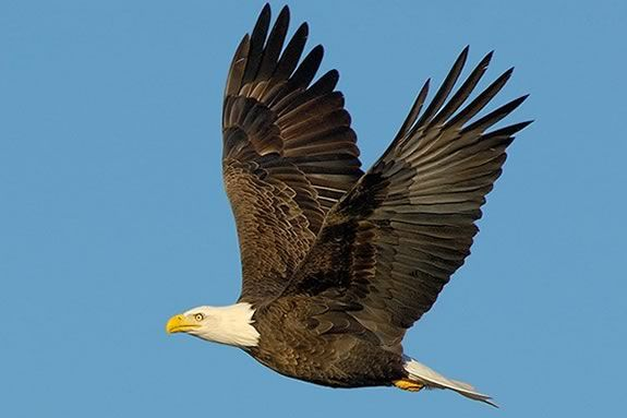 Kids are invited to come learn about eagles at Joppa Flats Education Center in Newburyport!