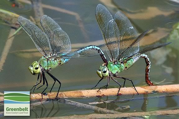 Essex County Greenbelt Association hosts a Insect Exploration Workshop for families at Cox Reservation in Essex Massachusetts!