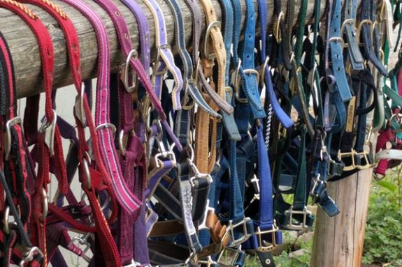 Essex County Trail Association Equine Gear Pre-winter sale