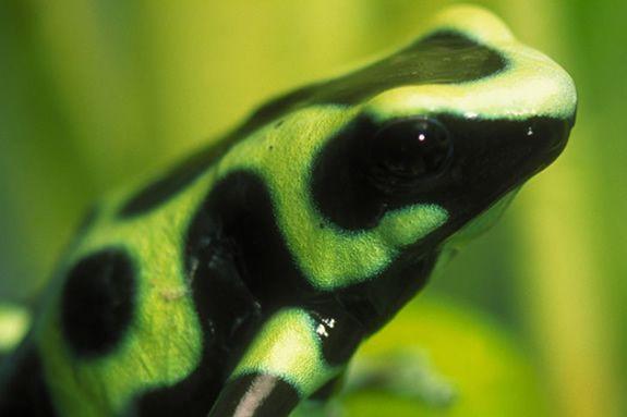 Museum of Science, Boston Frogs Exhibit