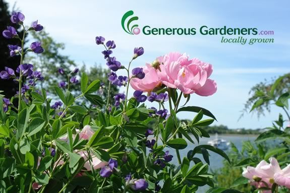 Generous Gardeners is having a plant sale to benefit the GEF!