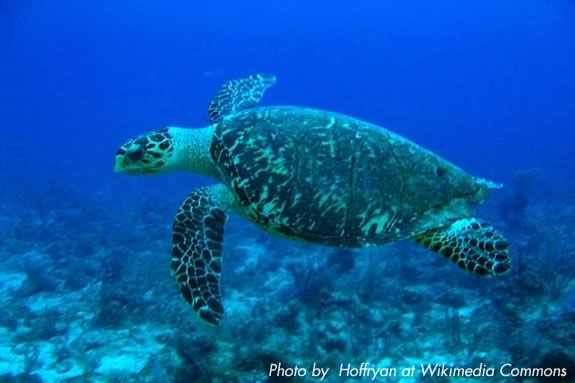 Kids will learn about Sea Turtle after school at Joppa Flat Education Center