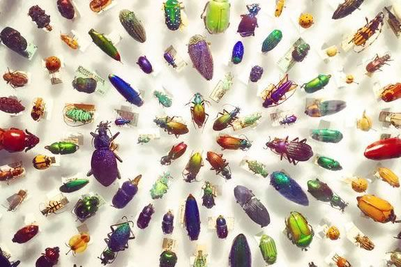 Kids and families are invited to learn about bugs at the Harvard Museum of Natural History.