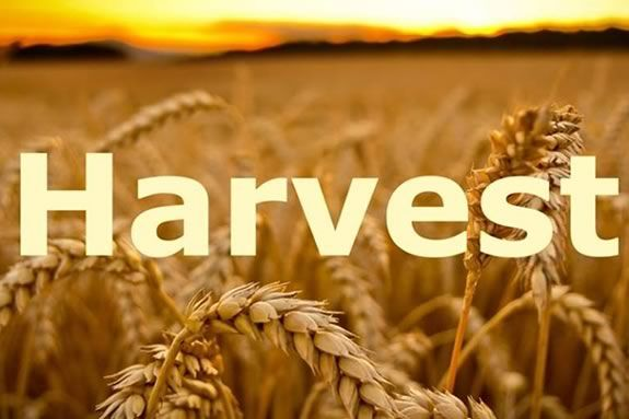 Join HWRHS Choirs and A Cappella groups for the Annual Harvest Concert & Auction at Hamilton Wenham Regional High School