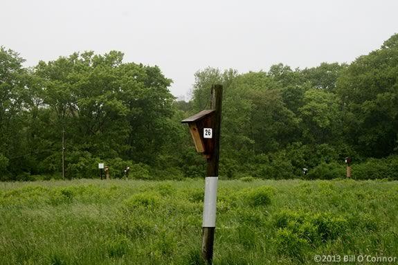 Explore the fields at Mass Audubon's Ipswich River Wildlife Sanctuary!