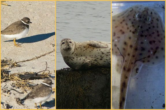 The Parker River Watershed provides habitat for a huge range of species!