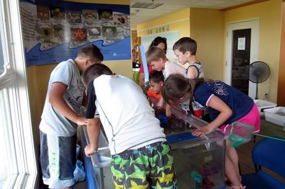 You can look at, AND touch the creatures in Joppa Flats touch tank!