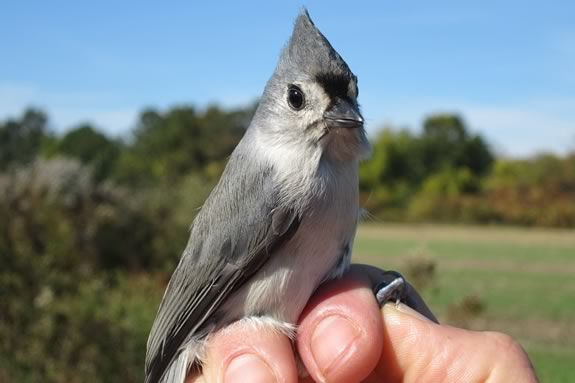 Mother's Day at the Banding Station will teach you about bird identification, and